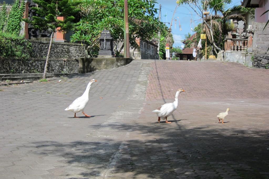 Singapore Expat Diary