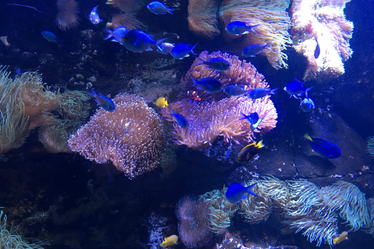 Sydney Aquarium Dory