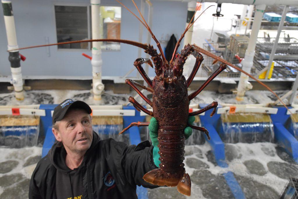 Perth Lobster